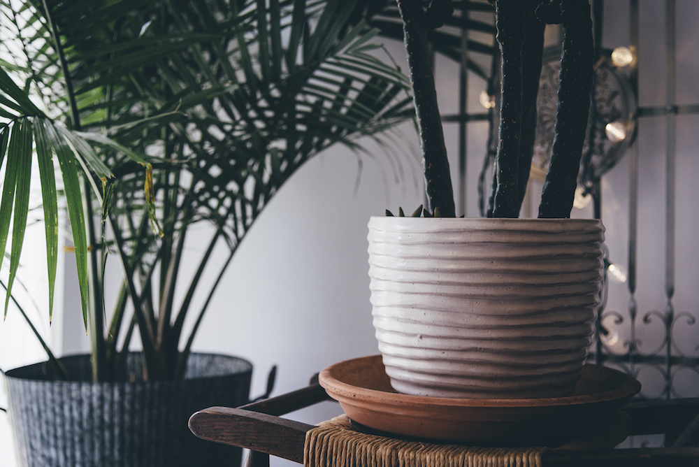 Plants and flowers that bring positive feng shui